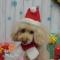 可愛い愛犬の撮影スポット~クリスマス~